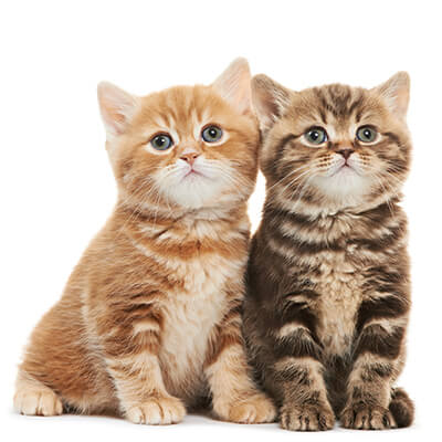 کمبود تورین  در گربه ها