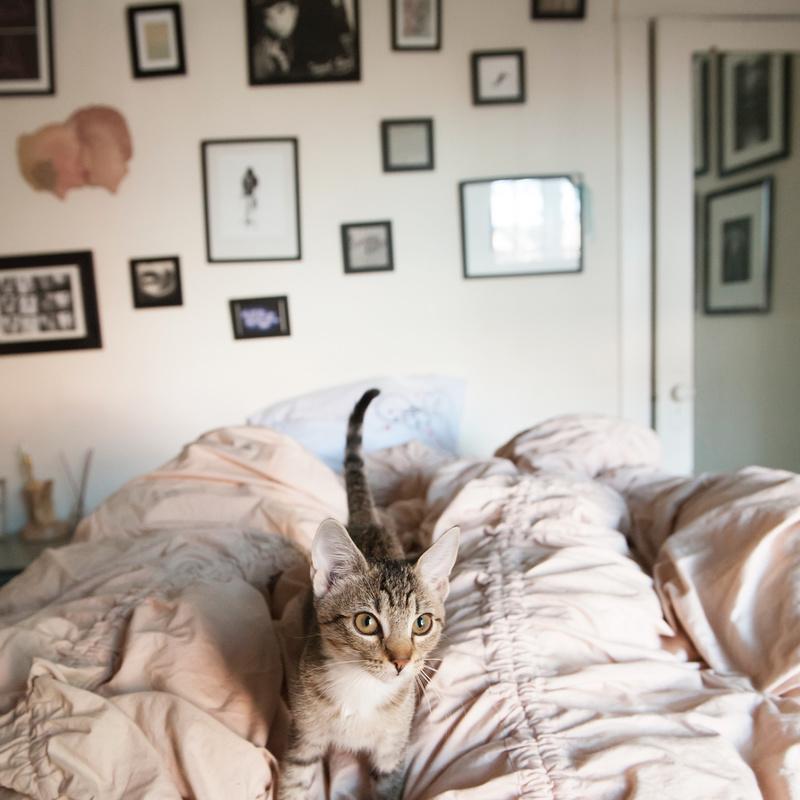 ۵ علت مهمی که گربه ها روی تخت ادرار می کنند