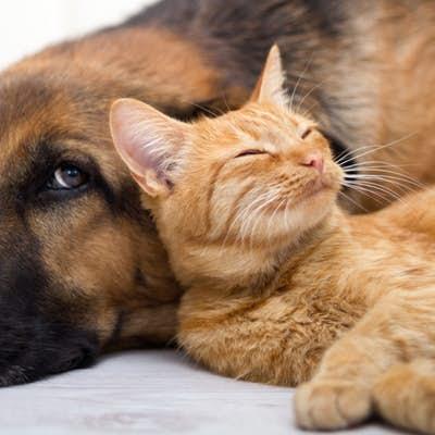 ٩  نکته مهم که ممکن است در اثر عدم توجه شما،   عمر حیوان خانگی را کاهش یابد